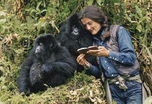 Diane Fossey